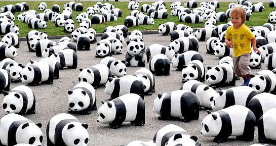 WWF comemora 50 anos