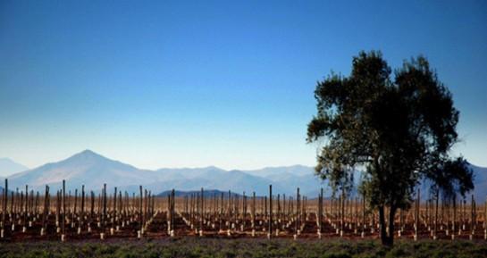O promissor Vale do Limarí é a nova sensação do Chile
