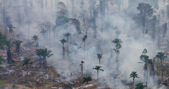 1,5 milhão assinam contra o novo Código Florestal