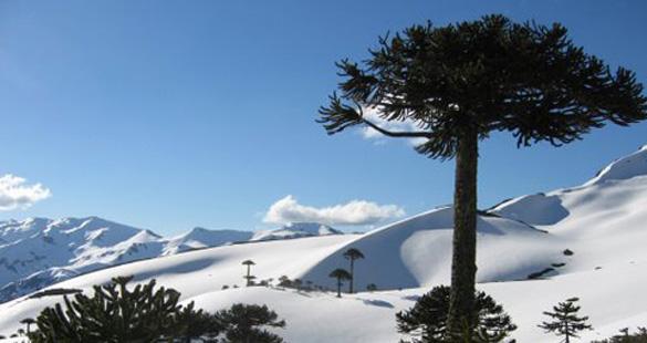 Natureza em Araucanía