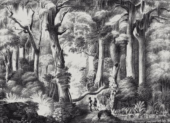 Novas perspectivas sobre a pintura brasileira no século XIX