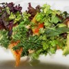 Mix de salada com cauda de lagosta grelhada