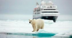 Urso Polar - Silversea
