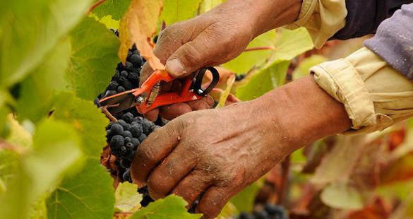 Exclusividade e bons vinhos no Vale do Rosário | Chile