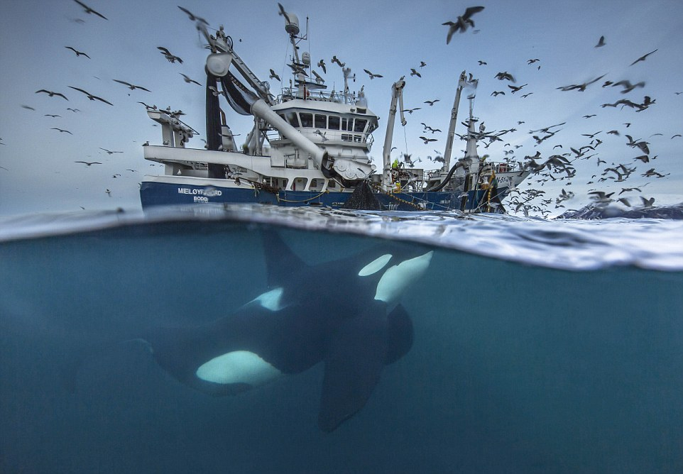 Concurso Wildlife Photographer of the Year