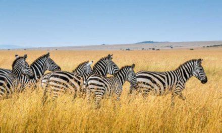 África do Sul em dois tempos