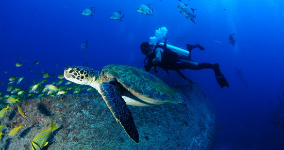 Mergulho em Pernambuco