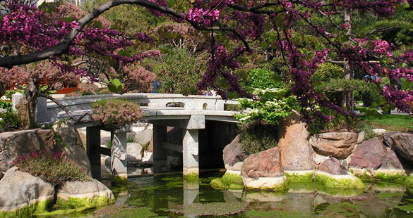 Estilos de jardim: desértico e japonês
