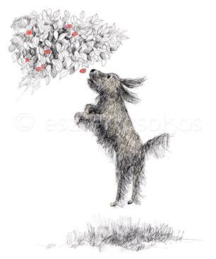 dog draw