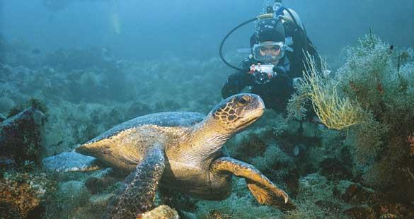 Cruzeiro em Galápagos