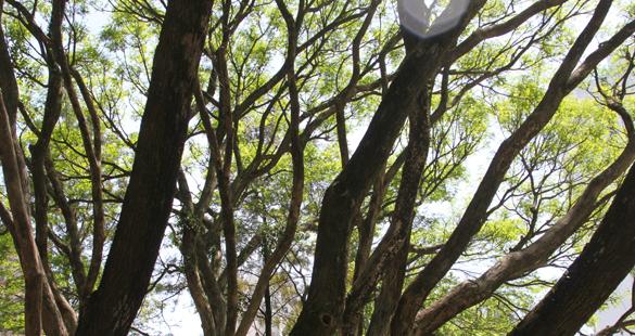 Ataque à legislação ambiental brasileira