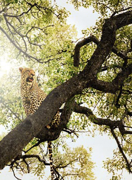 Safari na África do Sul fotografado por Chris Davis