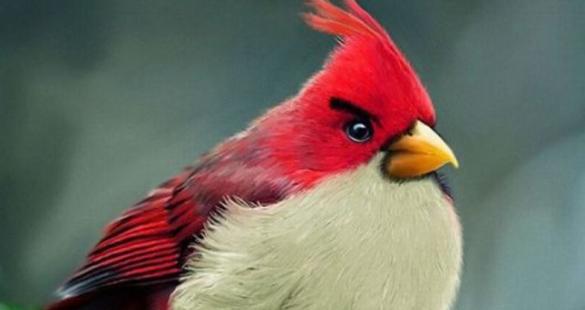 Angry Birds reais