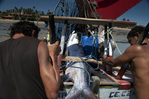 Flecheiras Pesca Artesanal