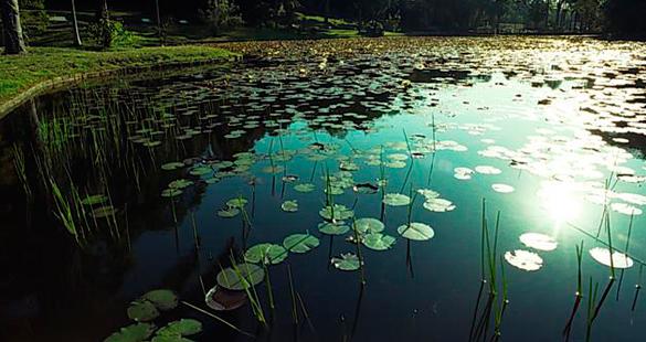 Piquenique Fotográfico no Jardim Botânico de SP