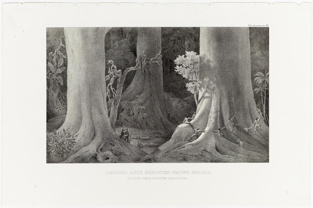 A Arte botânica de Von Martius em exposição no Rio de Janeiro