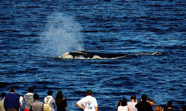 Começa a temporada de baleias no Uruguai